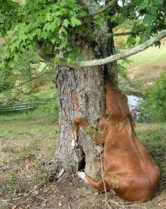 こちらでも馬はまった