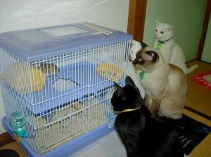 猫に囲まれたハム