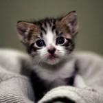 面白猫動画集
