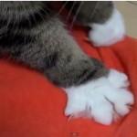 意外に器用で多機能な猫の手【動画】