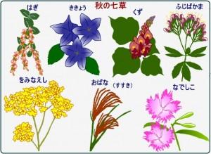 nanakusaaki